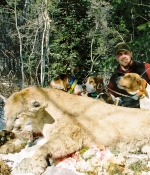 Idaho Mountain Lion Hunting with Hounds